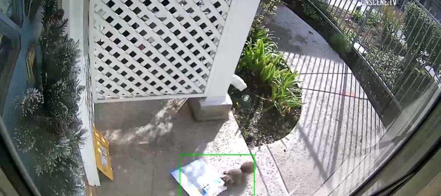 ¡Se llevaron un paquete! Si no lo ve en las cámaras jamás creería quién fue el ladrón