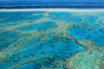 Cámara atiende grave problema de arrecifes de coral del sur de Florida