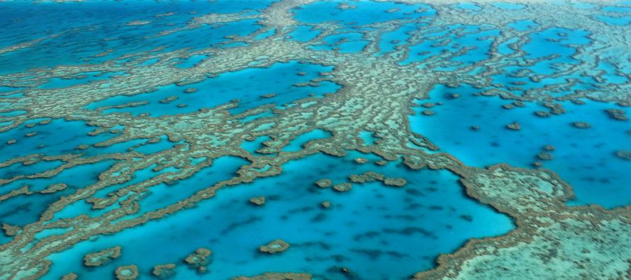 Gran Barrera de coral en riesgo de extinción por el calentamiento global