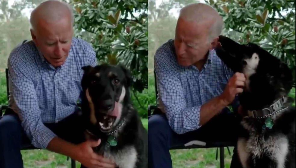 Major, el perrito rescatado que vivirá en la Casa Blanca con Biden