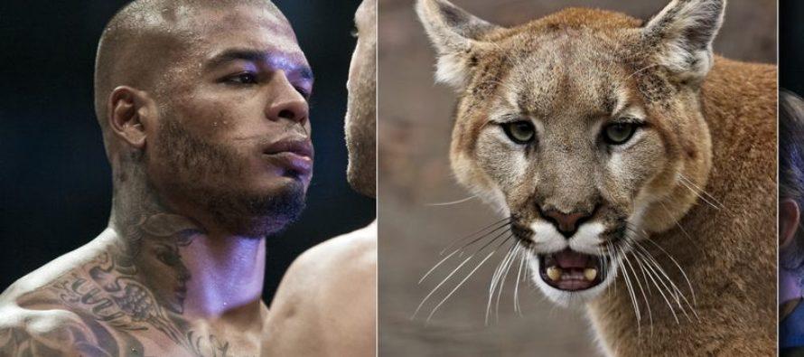 Campeón de boxeo acusado de permitir que un puma escapara en Florida
