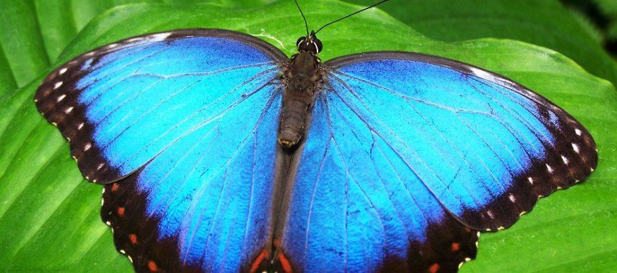 Exposición anual de arte estudiantil explorará la vida de los insectos de Miami