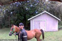 Hombre fue arrestado tras robar casa en Florida con su caballo (Video)