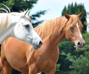 ¡Atención! Alguaciles de Florida previenen a ciudadanos de matanza de caballos para vender su carne