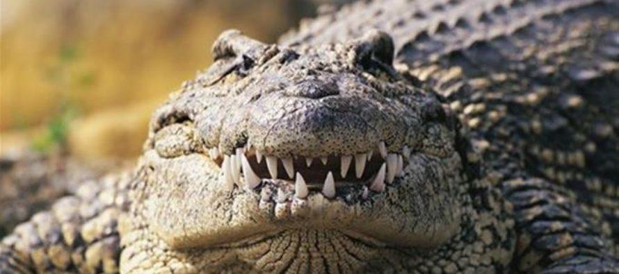 Caimán atacó a persona en una reserva de vida silvestre en Florida