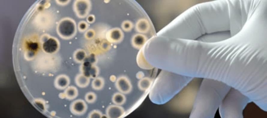 Alertan en EE UU sobre la propagación de hongo resistente a los medicamentos
