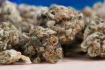 Incertidumbre en inversionistas de la marihuana medicinal por fallo de la Corte Suprema de Florida