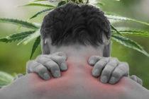 Dolor crónico: principal causa del uso de marihuana medicinal en Florida