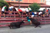 Brutal embestida de un toro a un hombre en un encierro en España (video)