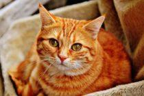 Si tienes problemas cardíacos, los expertos te recomiendan tener un gato