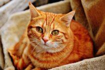 ¡Increíble! Un gato desapareció en Michigan, recorrió más de 1300 millas y fue encontrado en Florida