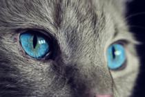 Mujer arrestada en Florida por intentar ahogar a un gato