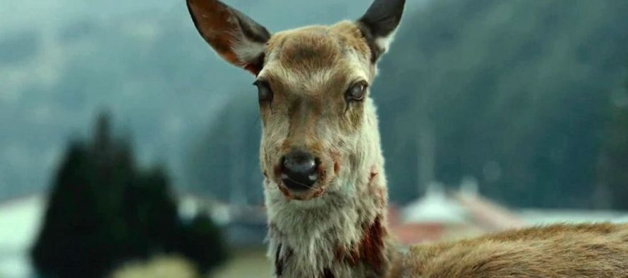¡Alertan a los cazadores! Aparecen ciervos zombies en 24 regiones de EEUU