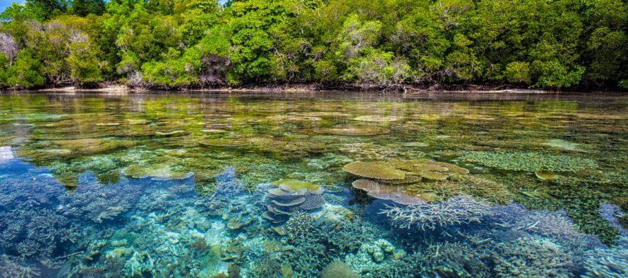 Desde la Universidad de Noha Southeastern crean planes para recuperación de corales en Florida
