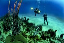 Legisladora quiere prohibir protectores solares que dañan los arrecifes de coral en Florida