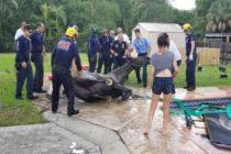 Un caballo que cayó en una piscina al sur de Florida murió horas después por obstrucción intestinal