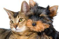 ¿Perros o gatos? Encuesta revela qué tipo de mascotas causan más felicidad