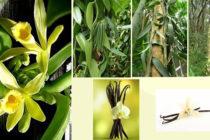 Descubre el nuevo exótico cultivo que colocará a Florida como productor de especias
