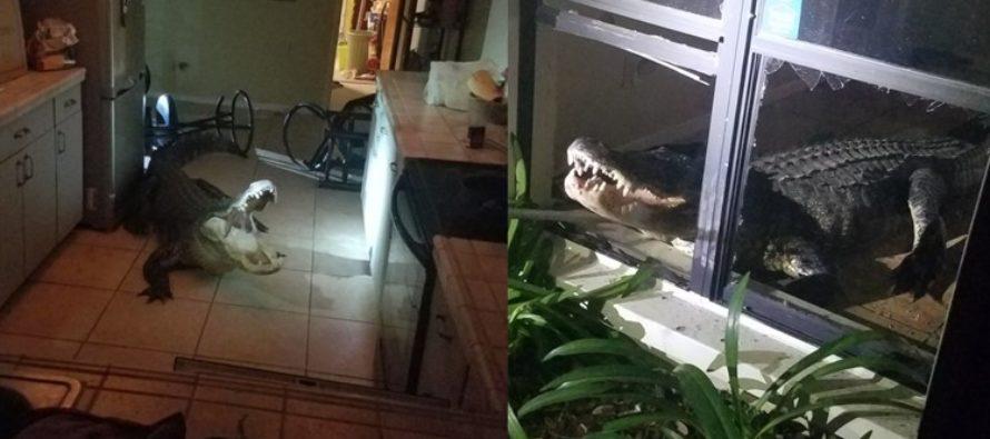 Una mujer mayor de Florida encontró «divertido» que un caimán irrumpiera en su casa