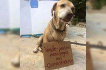 Conoce a Deko, el perro que vende postres para pagar su quimioterapia