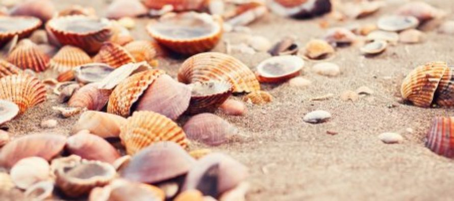 En el golfo de Florida se encuentra escondido un enorme asentamiento de conchas marinas