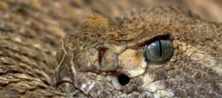 Llevaba a su serpiente de cascabel de paseo por la playa en Florida