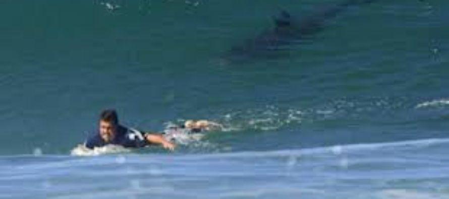 Registran nuevo ataque de tiburón en playa de Florida en menos de 24 horas