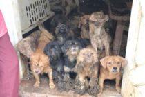 Más de 100 animales que vivían en «estado deplorable» fueron rescatados de una casa en Miami-Dade