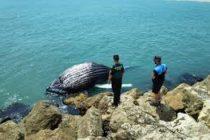 Una ballena recién nacida murió después de varar al norte de Mar-A-Lago