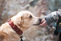 ¡Fieles compañeros! El 21 de julio de cada año se celebra el Día Mundial del Perro ¿sabes los motivos?