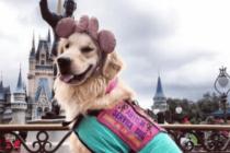 Una perra de asistencia se volvió viral por su trabajo en Disney World (fotos)