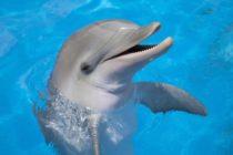 ¡También lo sienten! Delfines hembra tienen orgasmos como el de las mujeres por su desarrollado clítoris, según estudio