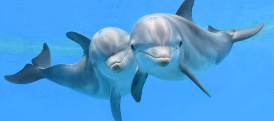 Encuentran muertos a 2 delfines con heridas de bala