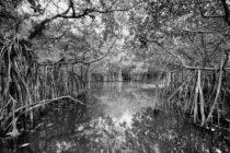 Fotógrafo asegura que no hay otro lugar en la tierra como los Everglades