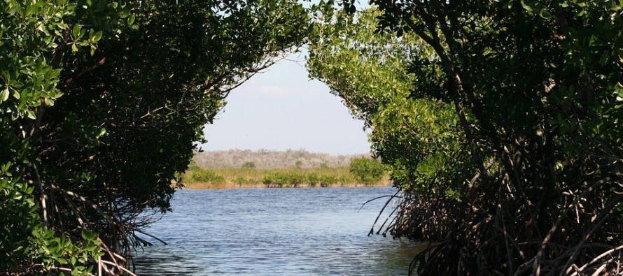 Rescatan a familia que estuvo a punto de hundirse en Los Everglades