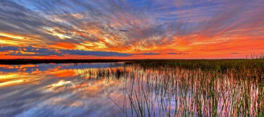 Todos los parques estatales de Florida cierran por propagación de COVID-19