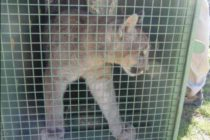 400 animales buscan refugio en Florida ante llegada de Dorian
