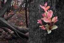 Las esperanzadoras fotos captadas en zonas incendiadas en Australia