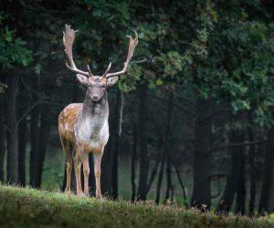Ni una semana tiene la temporada de caza de ciervos y ya se registraron tres heridos por accidente