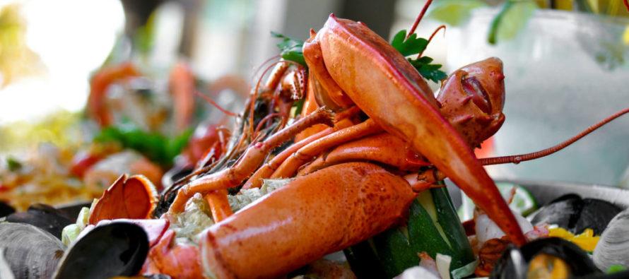 Descubre por qué Miami es una de las ciudades con las mejores opciones gastronómicas de EEUU