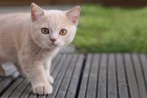 8 datos curiosos que debes conocer si te gustan los gatos