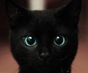 Descubre por qué hoy se celebra el día de la Apreciación del Gato Negro en EEUU