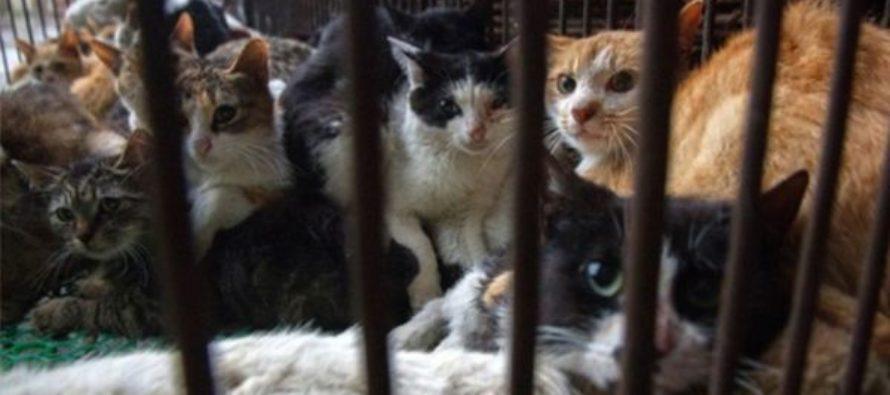 Policía investiga caso de gatos envenenados en complejos de condominios de Miami