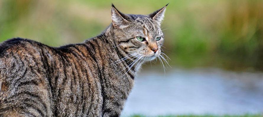 ¿Tu gato no te atiende? no es que no te entienda, conoce la razón