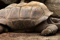 Ofrecen $200 de recompensa por la devolución de una longeva tortuga perdida en Hollywood