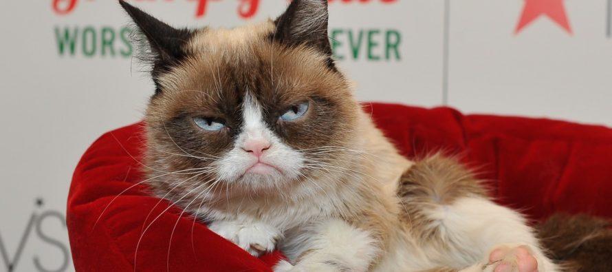 Falleció Grumpy Cat la gata más famosa de las redes sociales