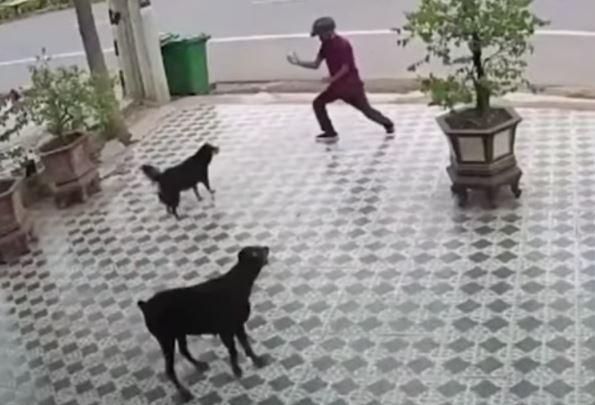 Al estilo Karate Kid! Se salva del ataque de unos perros por imitar al señor Miyagi