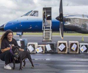 Unidos por el desastre del huracán: Perros, gatos y conejos llegan al sur de Florida desde las Bahamas