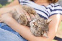 Tips para acariciar a un gato y evitar ser atacado
