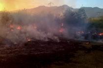 Doce adolescentes que cazaban conejos para comer mueren en incendio en cañaveral en Venezuela